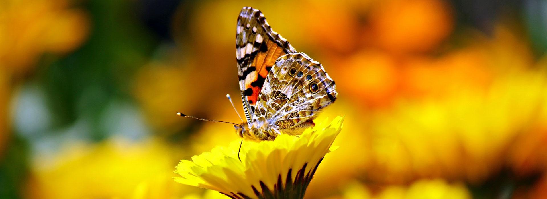jardin des papillons Vannes
