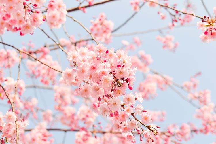 Conseils pour le printemps en médecine traditionnelle Chinoise